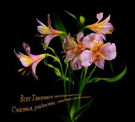 http://www.vprazdnik.ru/otkrytka/25_yanvar/12.jpg